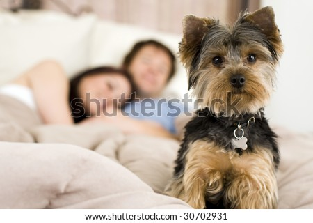 Happy couple laying in bed with their dog - focus on dog - stock photo