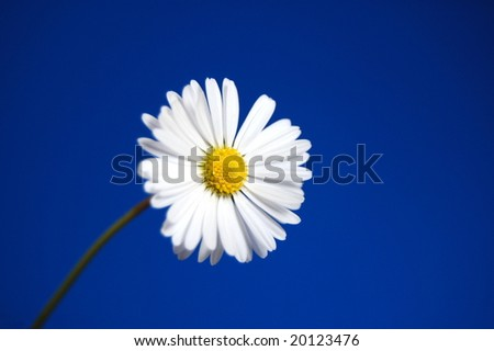 happy daisy flower under blue spring sky - stock photo