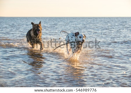dogs chasing through the - photo #36