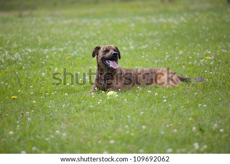 Happy dog in the park - stock photo