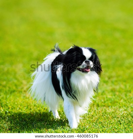 Happy Dog on green grass - stock photo