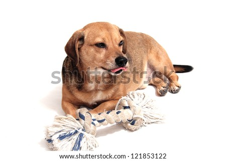 happy dog play with the rope naval