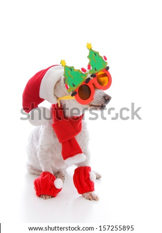 Happy dog wearing a santa hat, comical Christmas glasses and scarf and leggings