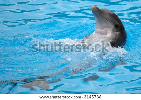 Happy dolphin is swimming in the water. - stock photo