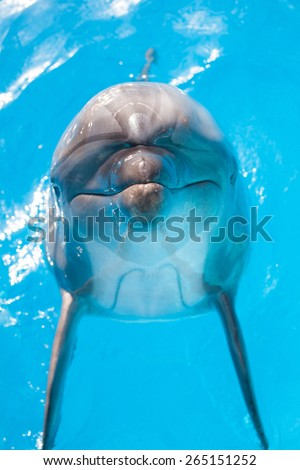 Happy dolphin jumping to you - stock photo