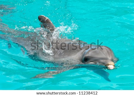 Happy dolphin swimming in blue water