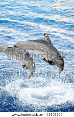 happy dolphins jumping - stock photo