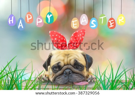 Happy Easter. A young cute dog puppy Pug wearing Easter rabbit Bunny ears sitting next to a pastel colorful of eggs. - stock photo