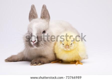 Happy Easter animal, Rabbit on chick - stock photo