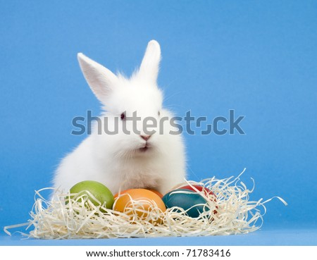 Happy Easter - baby rabbit and easter eggs - stock photo