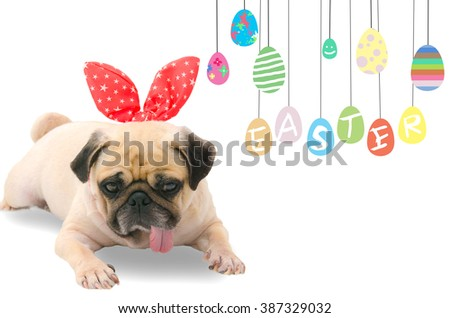 Happy Easter Day. A young cute dog puppy Pug wearing Easter rabbit Bunny ears sitting next to a pastel colorful of eggs with copy space. - stock photo