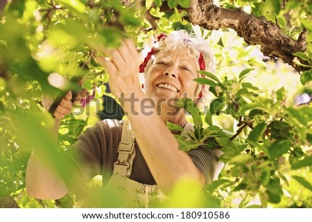 Happy elder woman pruning dried buds from the tree. Senior lady gardening in her farm smiling - stock photo