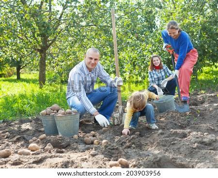Happy family harvesting potatoes in vegetables garden - stock photo