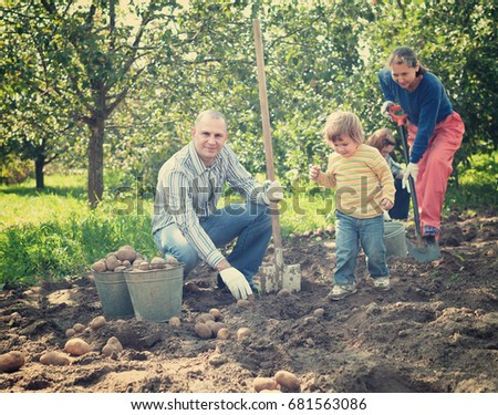 Happy family harvesting potatoes in vegetables garden