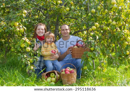 Happy  family  is picking of apples in the orchard - stock photo