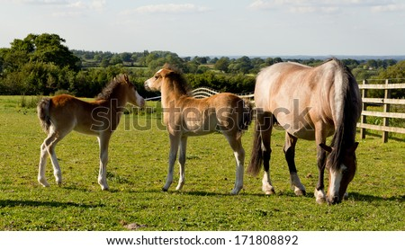 Happy family-Mother and her foals standing happily in their field in the english countryside. - stock photo