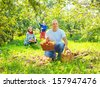 Happy family with apples harvest in garden - stock photo