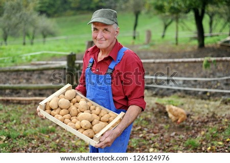 Happy farmer show his organic potato - stock photo