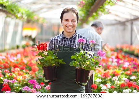 Happy gardener in a greenhouse holding flowers  - stock photo