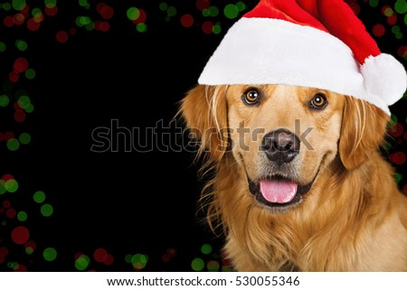 Happy Golden Retriever dog with black background and Christmas light bokeh with room for text