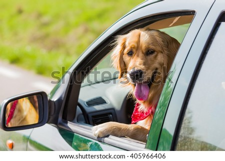 Happy golden retriever dog  with his head out the window of a vehicle - stock photo