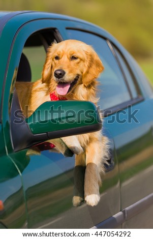Happy golden retriever dog  with his head out the window of a vehicle