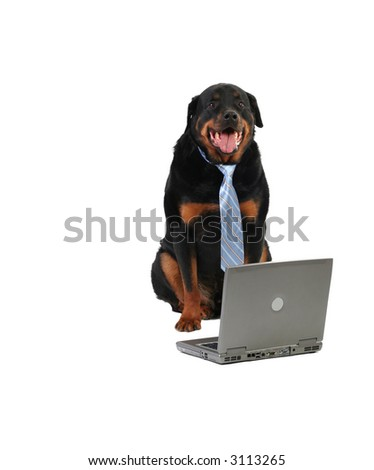 happy guard dog wearing a tie, internet security concept, isolated on white - stock photo