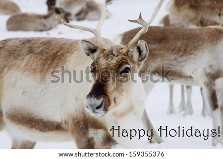 Happy Holidays! Seasons greetings with a reindeer in the snow. Painting style. - stock photo