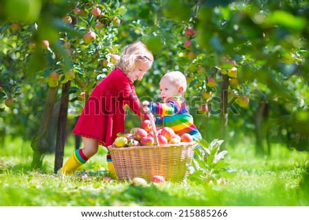 Happy little children, toddler girl and funny baby boy, brother and sister, playing together in a beautiful fruit garden eating apples next to a big basket on a warm autumn day outdoors