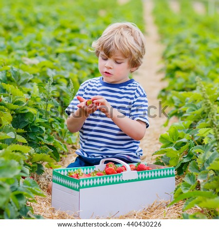 Happy little kid boy picking and eating strawberries on organic bio berry farm in summer, child on warm sunny day. Harvest fields in Germany. Healthy food for children. - stock photo