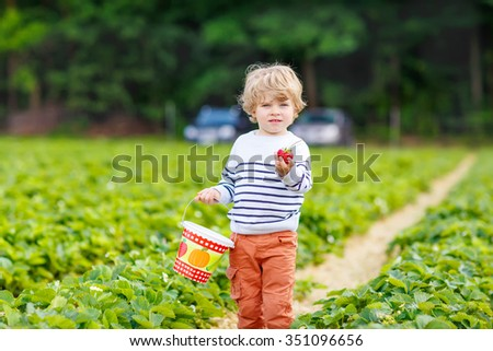 Happy little toddler kid boy picking and eating strawberries on organic pick a berry farm in summer, on warm sunny day. Harvest fields. Healthy food for children. Gardening and farming concept - stock photo