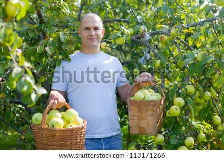 Happy man picking apples in the garden - stock photo