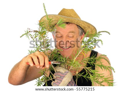 Happy middle aged gardener prunes branches off a shrub.