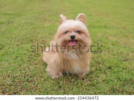 happy mixed breed dog sitting in the garden - stock photo