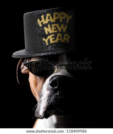 Happy New Year Boxer Dog wearing hat and sunglasses - stock photo