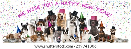 Happy new year pets - stock photo