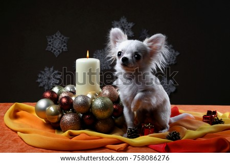 Happy new year 2018 - small dog near candle on red and yellow table with blur snowflakes on dark background