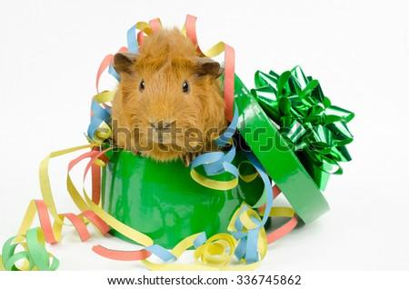 happy party pig - stock photo