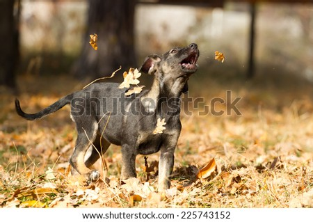 Happy puppy  in an autumn park - stock photo