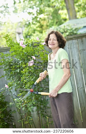 Happy senior woman gardening and pruning rose bush with clippers - stock photo