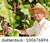 Happy senior worker holds grape cluster - stock photo