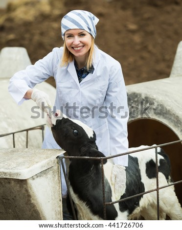 Happy vet taking care of newborn calf in livestock farm - stock photo