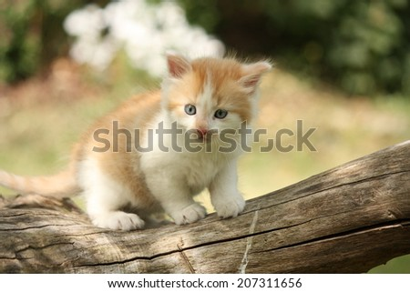 Happy white red kitten resting on the tree stump - stock photo