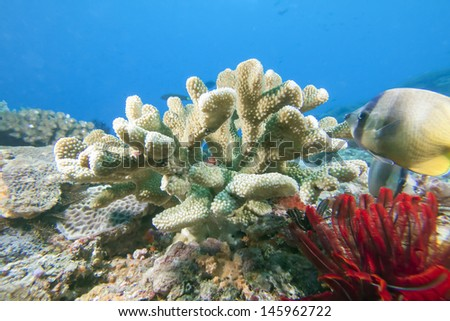 hard coral with fishes - stock photo