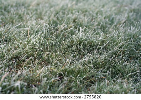 Hard frost on a short grass lawn - stock photo