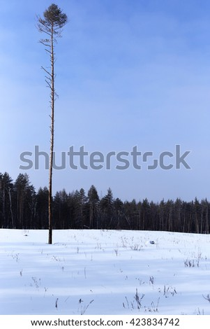 hard life in solitude and cold lonely tree on a background of dense forest and blue   sky