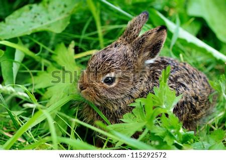 hare - stock photo