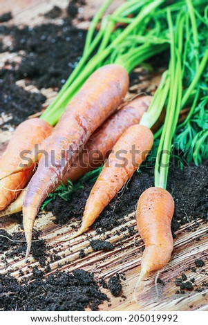 Harvest carrots on a wooden table. Shallow depth of field and focus on the near carrots - stock photo