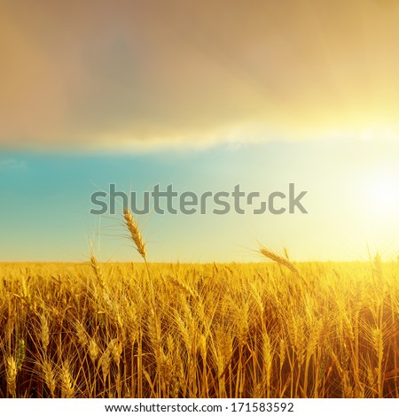 harvest field and sunset over it - stock photo