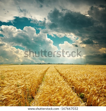 harvest field with track and low clouds over it